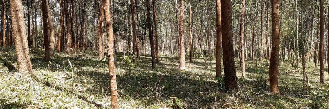 Zoom sur Madagascar – Journée Mondiale du Bois